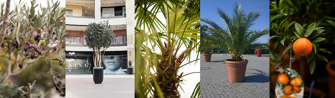 Zastita biljaka u zimskom periodu Urban Garden